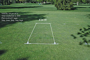 Figure 2: When Velocity is applied regularly but infrequently, in this case five monthly applications at 2 ounces product per acre in 2009, gradual but significant reductions in Poa annua can be obtained. The image was taken on April 26, 2010. Note the Poa annua in the foreground that was untreated.