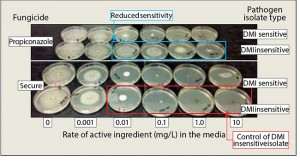 Figure 2: In vitro control of DMI of insensitive isolates. Photo courtesy Mike Agnew, Ph.D.