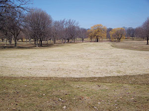 Figure 1: Gray snow mold, caused by Typhula incarnata, can decimate turf under snow cover for 60 days or more. Note the sharp line delineating between sprayed and non-sprayed turf at this course in Wisconsin. Photo courtesy Paul Koch, Ph.D.