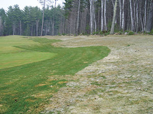 """Figure 2: Speckled snow mold, caused by Typhula ishikariensis, causes severe damage in areas with snow cover greater than 90 consecutive days. At this course in Michigan's Upper Peninsula, where disease pressure is extreme, a """"clean up"""" fungicide pass is made to protect the rough closest to the fairway while anything unsprayed is severely infected. Photo courtesy Paul Koch, Ph.D."""