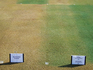 """Civitas combined with Harmonizer, in addition to several other turf pigments and pigmented turf fungicides, applied in the fall can produce dramatically """"greener"""" turf the following spring compared to non-treated turf. This photo was taken five months after the application on March 15th, 2012, in Madison, WI. Photo courtesy Paul Koch, Ph.D."""