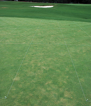 Stand symptoms of Pythium root dysfunction on a 'G-2' creeping bentgrass putting green.