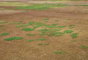 Differences in winter survival of annual bluegrass and creeping bentgrass following a mid-winter warming event.