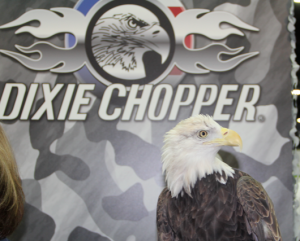 A bald eagle was on display at the Dixie Chopper booth last week at GIE+Expo in Louisville. Photo by Seth Jones