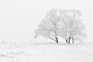 tree-in-fog-snow
