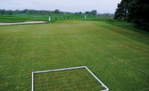 Researchers often used transects to accurately measure cover of annual bluegrass in this study.