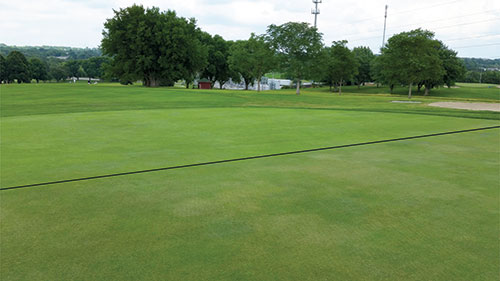 The foreground shows an annual bluegrass/creeping bentgrass green treated with both Trimmit (2 oz./acre) and Primo Maxx (6 oz./acre) every five to 10 days. The background section of the green had the same maintenance but did not receive the PGR mix. The turf in the foreground has typical signs of PGR over-regulation, including patches of discolored turf, leaf segregation and worn-leaf tips.