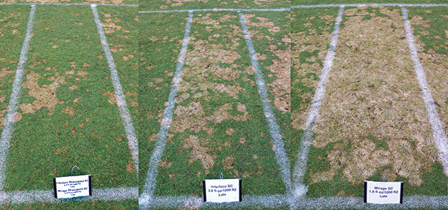Figure 4Combining Interface and Mirage was highly effective at suppressing snow mold at Marquette CC in 2015-2016, but protection broke down when either one of the products was applied alone.