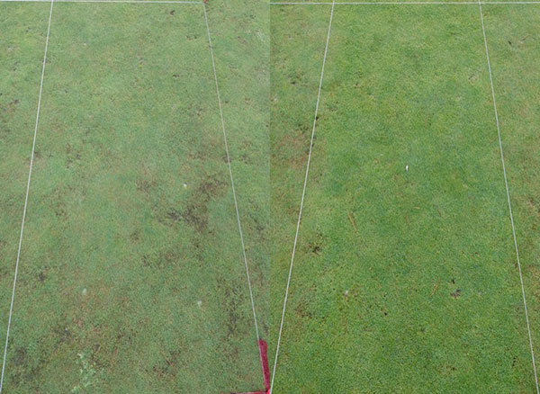 The photo on the left is an untreated area with severe sting nematode feeding damage. The photo on the right is on the same putting green, but nematicide application was properly timed.