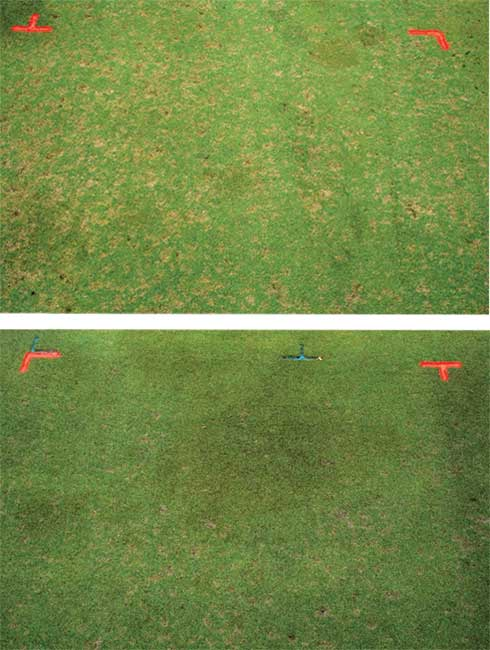 Dollar spot suppression with ferrous sulfate (FeSO4) applied at 0 (untreated control-top), 0.5 and 1 lb. per 1,000 sq. ft. on a 007 creeping bentgrass putting green.