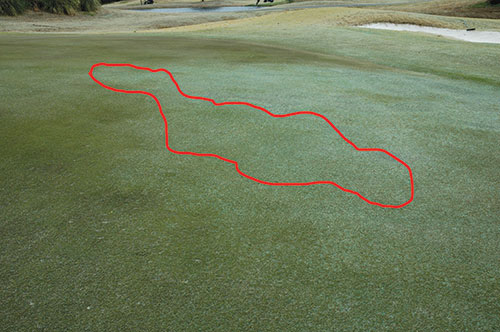 Nematodes In Southern Turfgrasses Golfdom
