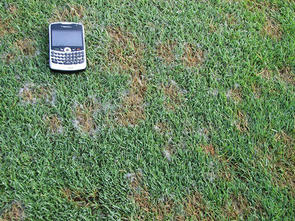 Best Demystifying Pythium diseases of golf course turfgrasses : Golfdom SB23