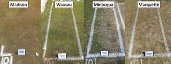 Snow mold at test sites (Photo: Paul Koch)