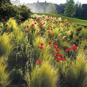 Wildflower Garden Photo: Hannah Schrum)
