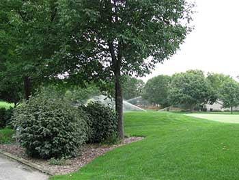 Separation of turf and ornamentals (Photo by: John C. Fech)