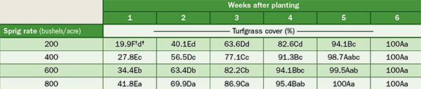 Effect of sprigging rate on turfgrass cover