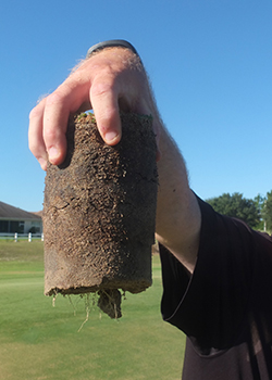 Rooting on Tifdwarf bermudagrass golf green treated with Indemnify in North Florida (Photo: Bayer)