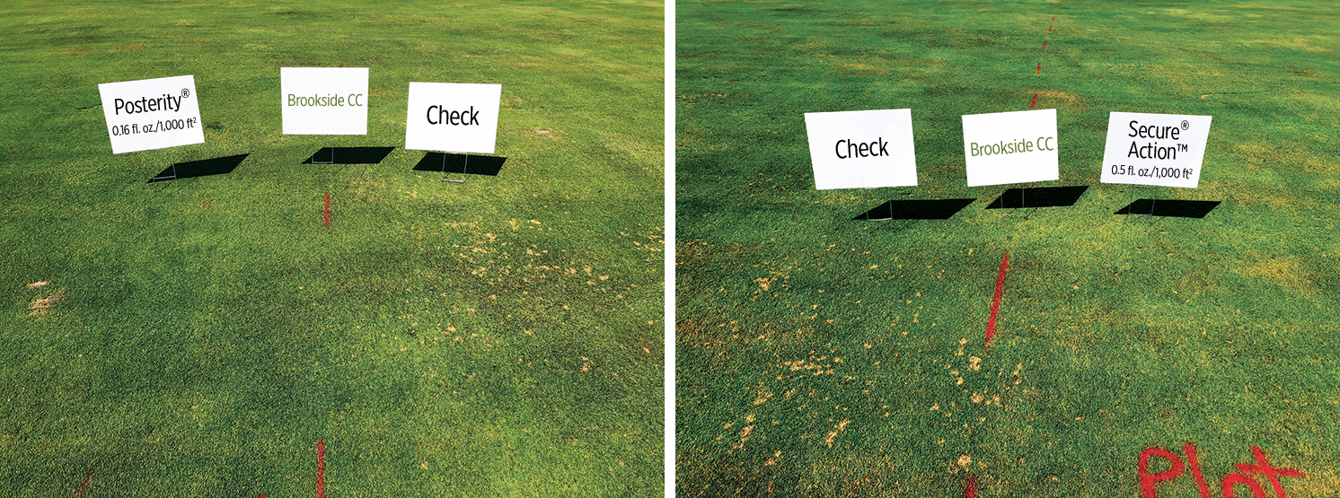 Posterity test plot and Secure Action test plot. Photo: Brookside Golf & Country Club