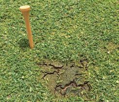 Silvery thread moss (Photo: Zane Raudenbush)