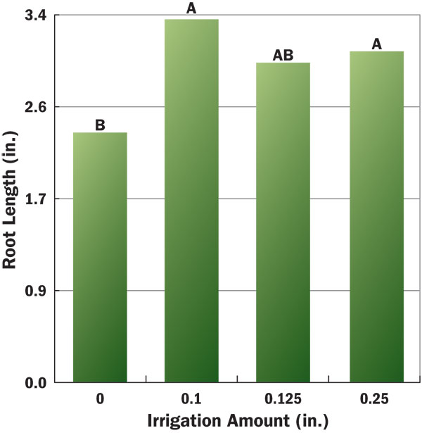 Figure 4 Influence of post-application irrigation on azoxystrobin efficacy (root length) against summer patch of creeping bentgrass. Bars with the same letter are not significantly different, according to Fisher's LSD t-test (P < 0.05).