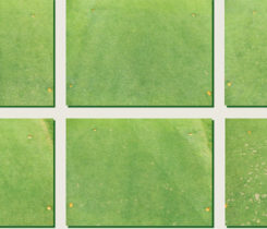 Dollar spot injury (Photo: Cole Thompson)