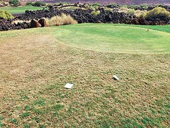 Damage to a perennial ryegrass rough bordering a tee box. (Photo: Adam van Dyke)