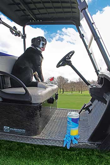 Many golf courses around the country are careful to sanitize equipment and golf carts and provide employees with personal protective equipment such as gloves. Here, Wolf Creek Superintendent Bill Irving's dog, Frazier, looks on during these uncertain times. (Photo: Golfdom Staff)