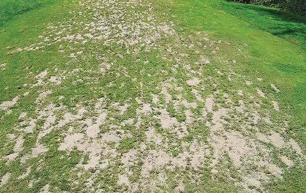 ▶ This tee at Amherst CC's 9-hole executive course, Ponemah Green, is too small to handle the excessive rounds put on it, says Superintendent Steve Wilson. (Photo: Amherst CC)