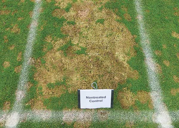 Snow mold pressure at our research station in Madison, Wis. was very high despite a relatively short window of snow cover. (Photo: Paul Koch)