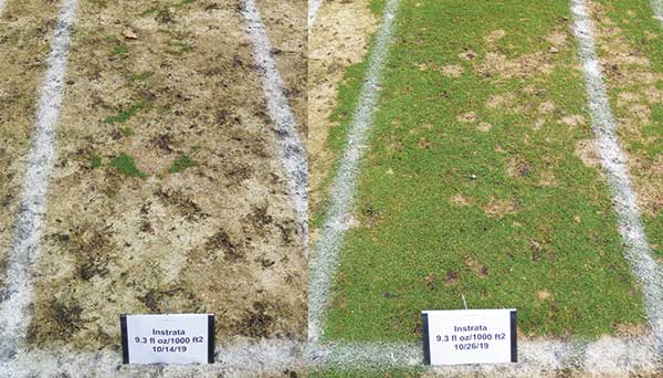 There can be a sharp cutoff in effective snow mold control. At our research site on Timber Ridge GC in Minocqua, Wis., the difference between no control and great control was just 12 days. (Photo: Paul Koch)