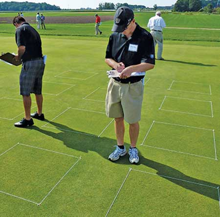 Here, researchers rate the plots for visible damage. (Photo: Doug Karcher, Ph.D.)