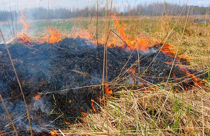 Turf burning (Photo: Gogiya/iStock/Getty Images Plus)