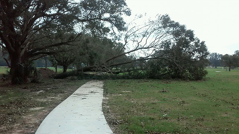 Eddie Daigle, superintendent of Osceola Municipal Golf Course in Pensacola, Fla., estimates the course lost a dozen trees due to winds from Hurricane Sally. <br /> (Photo: Edward Daigle)