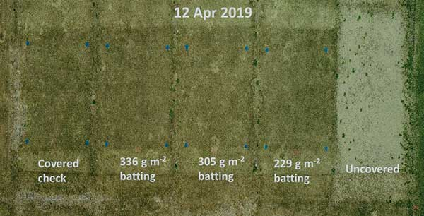 Effect of protective covers and batting material weight on spring greenup of TifEagle bermudagrass. Batting weights were 0.75, 1.0 and 1.1 ounces per square foot. (Photo: Eric DeBoer)