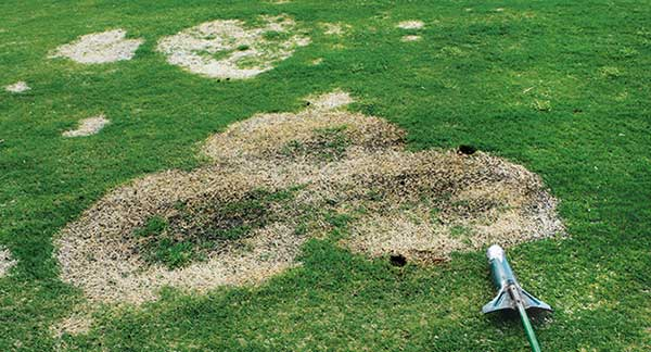 While spring dead spot symptoms show up after green-up, key control happens in the fall. (Photo: PBI-Gordon Corp.)