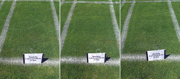 Recently released Posterity, Xzemplar and Maxtima provided effective dollar spot control. (Photo: Paul Koch, Ph.D.)