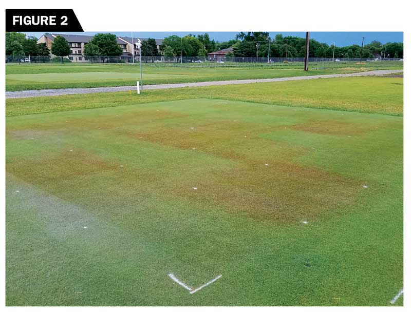 The impact of different PGR reapplication models on the turfgrass quality of a creeping bentgrass fairway mowed at 0.4 inch. (Photo by: William Kreuser, Ph.D.)