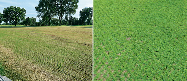 A successful grow in comes down to a healthy dose of preparation, ensuring the necessary supplies are on hand and, of course, Mother Nature. (Photos: Turfco)