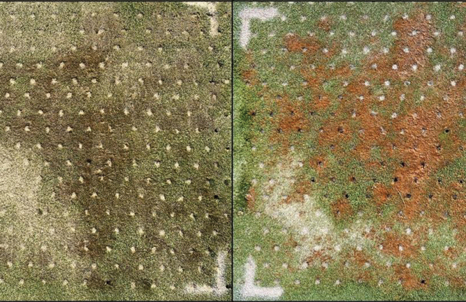 Plot treated with drench application of SDS and hollow tine aerification one day after treatment (left) and three days after (right). (Photo courtesy of Zane Raudenbush)