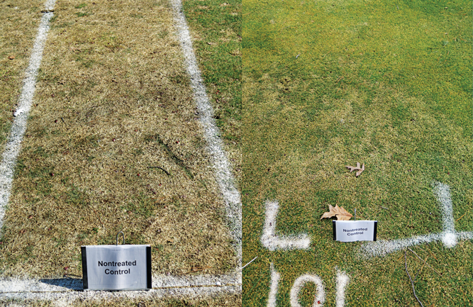 What a difference a year makes in Wausau, Wis. Nearly 100 percent disease on the nontreated control in 2020 (left) and nothing in 2021 (right). (Photo courtesy of Paul Koch, Ph.D.)