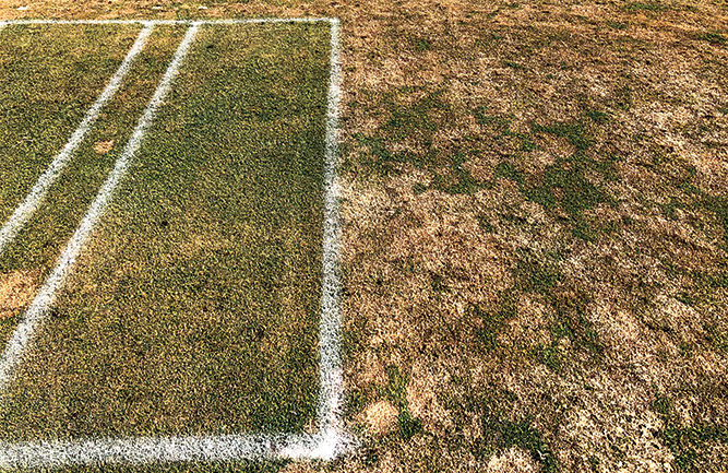Despite the heavy snow mold pressure in certain areas, fungicides still provided excellent disease control. (Photo courtesy of Paul Koch, Ph.D.)
