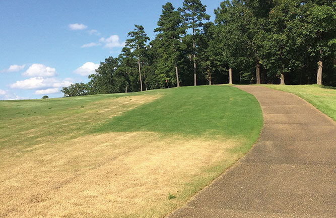 Vaaler Creek Golf Club has lost a lot of turf due to fall armyworm infestations. (Photo: Vaaler Creek GC)